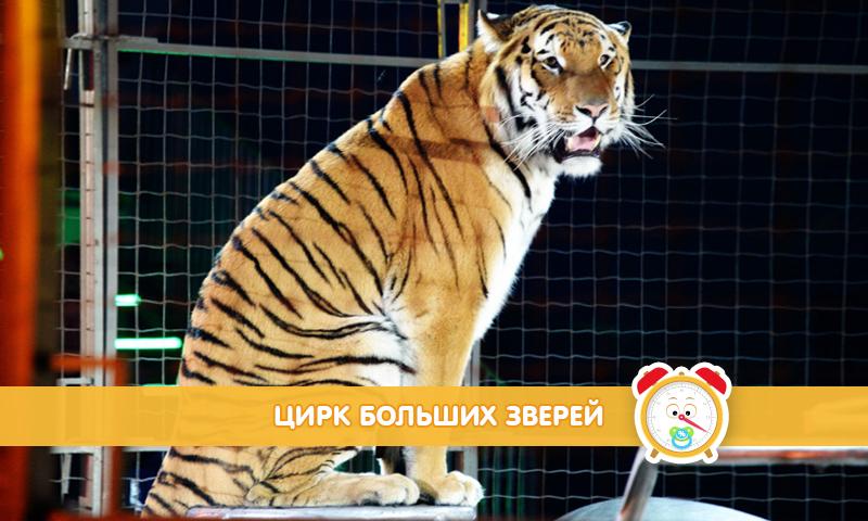 «Цирк больших зверей»